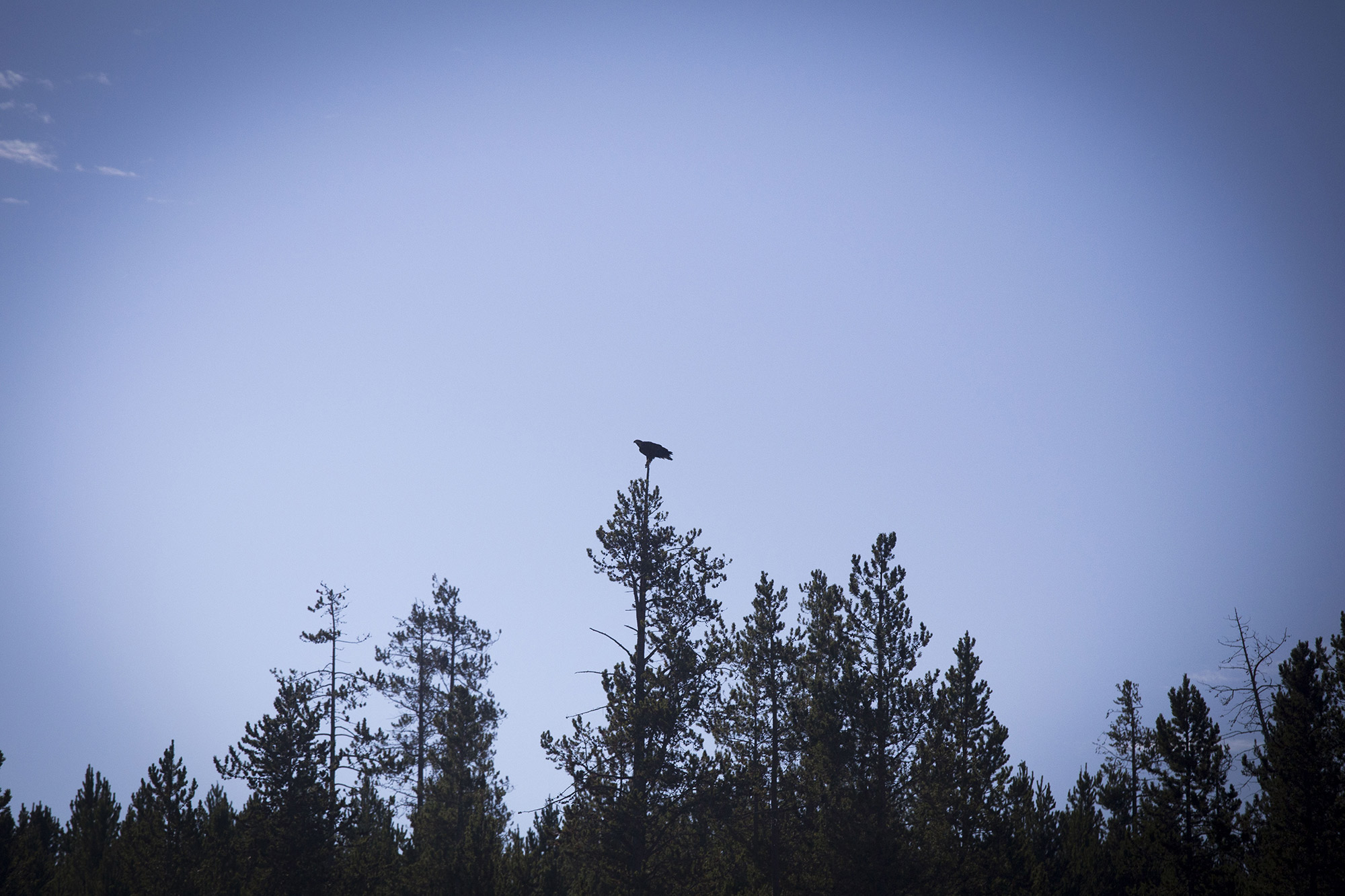 Ørnen tek ikkje unga. Foto: Even Sehested